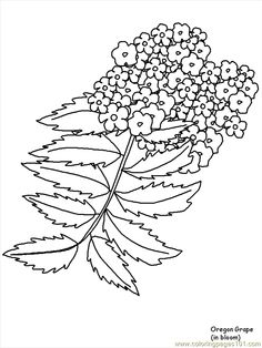 flower page printable coloring sheets free printable coloring page flower coloring pages oregongrape