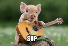 Is this not the cutest pig?