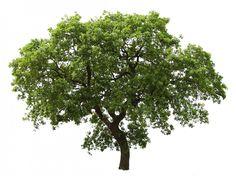 De Troostboom | Het Jaarwiel