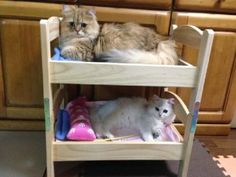Has IKEA officially launched a pet furniture line we don't know of? What's with all these pics of kitty sleeping on an Ikea bed exploding online? Well, no. It's only pet owners who have ingeniously converted the 2,299 yen (US$20) Duktig bed meant for children's dolls into a territorial one for their fur babies instead. […]