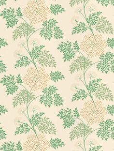 Cowparsley (DOPWCO104), a feature wallpaper from Sanderson, featured in the Options 10 collection.