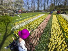 Thousands of visitors descend on the Garden of Europe in Lisse, the Netherlands each year to see millions of flowers bloom.