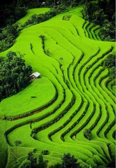 Sapa rice terrace is top 30 of natural beauty in the world #riceterrace #Sapa #Sapatours #Vietnam