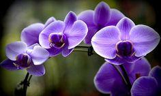 Lavender Rainbow by Karen Wiles