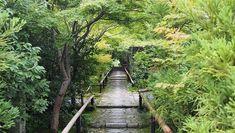 京都嫌いな人こそ、騙されたと思って行ってみてほしい美しい7つのお寺 -- オフィシャルプランナー yururi   トリッププランナー Gujo Hachiman, Photography Gallery, Kyoto Japan, Garden Bridge, Places To Go, Castle, Outdoor Structures, Travel, Japanese