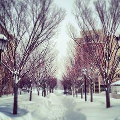 winter in boston - Google Search