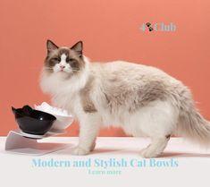 Cute Cat Bowls. Shop now!