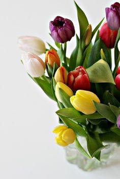 God, I love tulips.