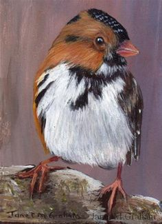 "Daily+Paintworks+-+""Harriss+Sparrow+ACEO""+-+Original+Fine+Art+for+Sale+-+©+Janet+Graham"