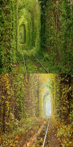 Tunnel Of Love In Ukraine,Most Romantic Place On Earth(VIDEO) #Travel #Place #Love #Amazing