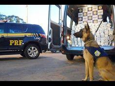 Polícia Rodoviária Federal EP11 (PRF) Anjos da Estrada EP11 (HD)