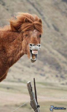 lustiges Pferd, Zaun, Zähne