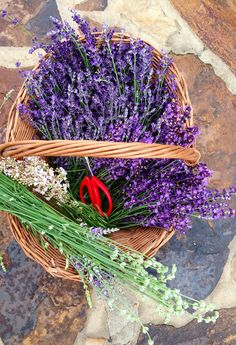 Destiny Hill Farm fresh cut lavender