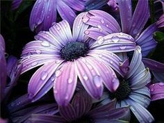 Photography, Flores, Rosas, Macro Photography, Landscape, Landscapes, Water Drops, Keefers Photo by Keefers_ | Photobucket