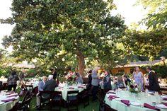 Dinner Under the Magnolia