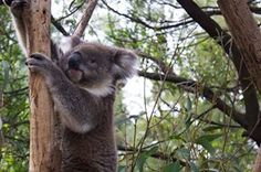 Australia Homeland, Sydney, Bucket, Australia, Vacation, Places, Photos, Vacations, Pictures