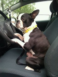 """""""What are we waiting for? Let's go! I drive."""" See, I told you I wouldn't be able to reach the gas peddle, humpfff!!"""