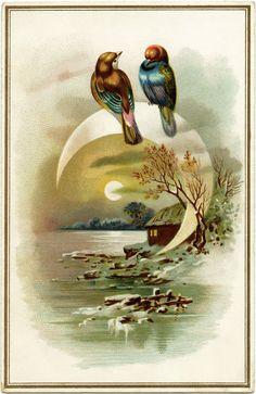Evening Bird Scene ~ Free Victorian Card Image