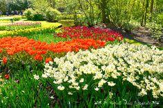 Keukenhof garden - Holland www.aruralchiclifestyle.com Amsterdam Travel, Holland, Trips, Garden, Plants, The Nederlands, Viajes, Garten, Lawn And Garden