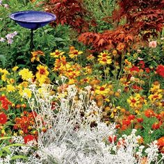 High-Impact, Low-Cost Summer Garden marigolds, asters, zinnias, and dusty miller in late summer Love Garden, Dream Garden, Shade Garden, Autumn Garden, Summer Garden, Outdoor Plants, Outdoor Gardens, Outdoor Decor, Ways To Save Water