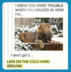 Lying on the cold hard ground...lol