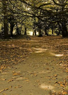 Stewart Park, Middlesbrough UK