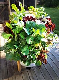 Garden Tower Project -- Look at this way cool way to grow lots of food -- straight up! Isn't it amazing how much food we can grow in very small spaces? From MOTHER EARTH NEWS magazine.