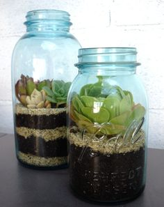 Terrarium in a Mason Jar! Why not?    http://www.itsoverflowing.com/2012/04/open-terrarium-no-fuss-garden-2/