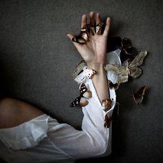 Photographer Emmanuelle Brisson - butterflies (6)
