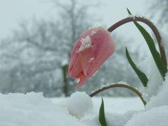 9 Best snow flowers images