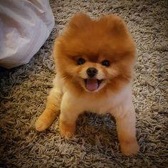 Cute puppy in happy mood