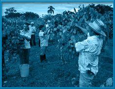 La misión de transformar el campo colombiano