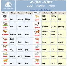 Vocabulary - ANIMAL NAMES: male, female and young