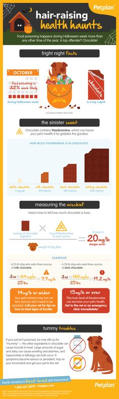 Did you know that food poisoning happens more during Halloween week than any other time during the year? And you guessed it: Chocolate is the top offender!