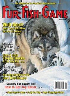FUR-FISH-GAME - January 2014 : WOLF ALERT: Take Your Shot Now Before It's Gone; Extreme ICE FISHING Adventures; Hide & Seek TROPHY BUCKS After the Rut; Outrageous Snow HOG HUNT; Running RABBITS with Just One Beagle; Country Fur Buyers Tell How to Get TOP DOLLAR; Best COYOTE Guns; 2-Jig Ice Rigs; Cage Trapping FISHER
