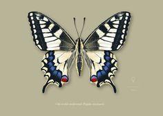 Scientific illustration, Entomology | Work