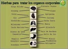 Hierbas para tratar los órganos del cuerpo de forma natural