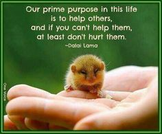 Our prim purpose in this life is to help others | HH Dalai Lama
