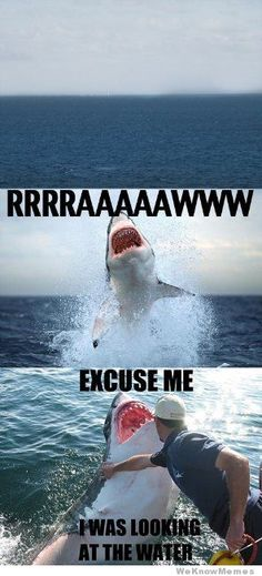 lol Put the shark in his place