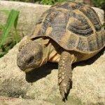 10 Frases com Tartaruga Em Inglês | EnglishOk http://www.englishok.com.br/10-frases-com-tartaruga-em-ingles/