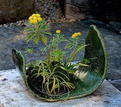 Bonsai...Inspiration...