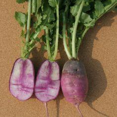 Sweet Baby Radish For a Sweet Spring Salad - Ellen Wells Home Grown Vegetables, Growing Vegetables, Veggies, Types Of Zucchini, Bean Varieties, Mini Cucumbers, Succession Planting, Cucumber Plant, Bush Beans