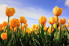 Flowers photoblog