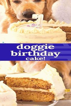 #Dog #cake #recipe #made #ingredients A dog cake recipe to celebrate Dozers birthday A layer cake frosted with fluffy buttercream  but its made with wholesome pooch friendly ingredientsbrp classfirstletterWe are glad to see you on our website for the Topic of friendlypDog Cake Recipe A dog cake recipe to celebrate Dozers birthday A layer cake frosted with fluff pins are as aesthetic and useful as you can use them for decorative purposes at any time and add them to your page or profile at any… Dog Safe Cake Recipe, Dog Cake Recipes, Dog Treat Recipes, Frosting Recipes, Dog Food Recipes, Dog Frosting Recipe, Fluffy Frosting, Vanilla Frosting, Buttercream Cake