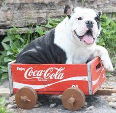 Meu carrinho!