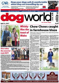 This week's Dog World #newspaper #dogs #dogshows #dogshowing #showdog #April21 #2017