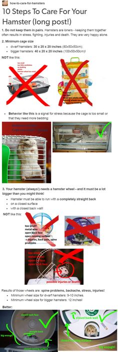 10 Steps To Care For Your Hamster. MORE IN THE LINK.4Do not buy them plastic tubes.5Your hamster needs enough bedding to dig and build tunnels... http://how-to-care-for-hamsters.tumblr.com/post/108186363215/10-steps-to-care-for-your-hamster-long-post