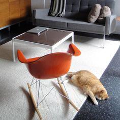 lili needs this orange chair...