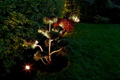 Blick auf eine asiatisch angehauchte Pflanzung mit romantischer Beleuchtung.