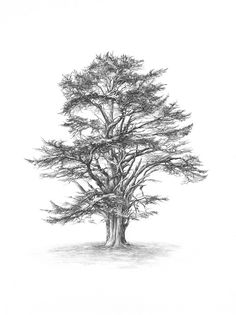 Lebanese cedar tree: symbolises strength, stability, endurance, wisdom, majesty, omnipotence, divinity and protection